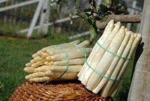 Primavera: moéche e asparagi