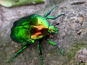 La fauna: gli invertebrati