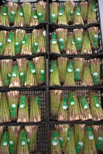 L'asparago di Conche