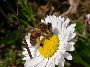 Il miele della Valle Millecampi