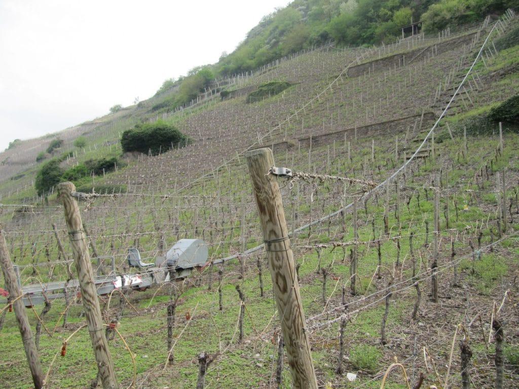 Vitigni scoscesi e carrello per la raccolta dell'uva